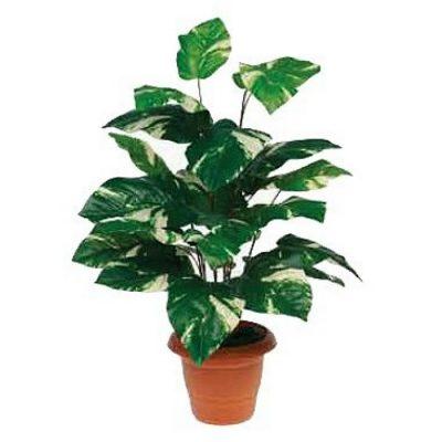 Τεχνητό φυτό - Πόθος 310735