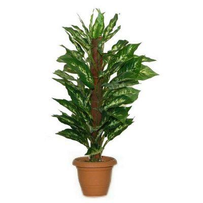 Artificial plant - Dieffenbachia with stick 310750