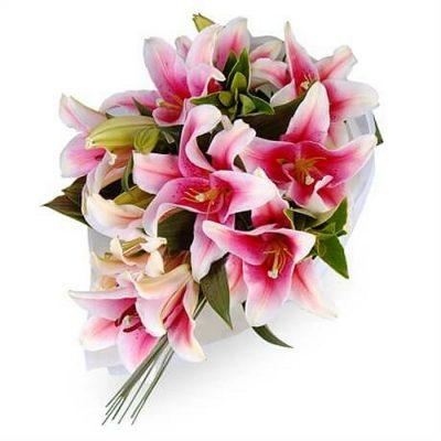 Fresh flowers Lilies - Stragazer - Oriental 00228