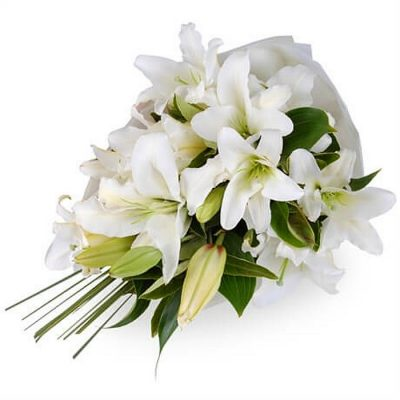 Fresh flowers Lilies - Stragazer - Oriental - Casablanca 00227