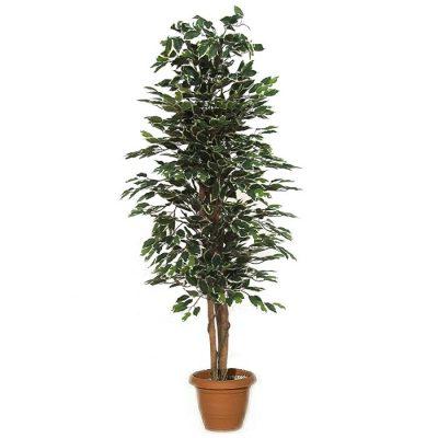 Artificial plant - Benjamin variegated 313200