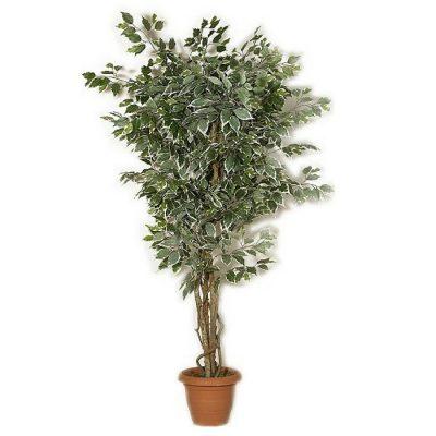 Artificial plant - Benjamin variegated 312700