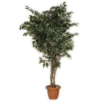 Artificial plant - Benjamin green 312700