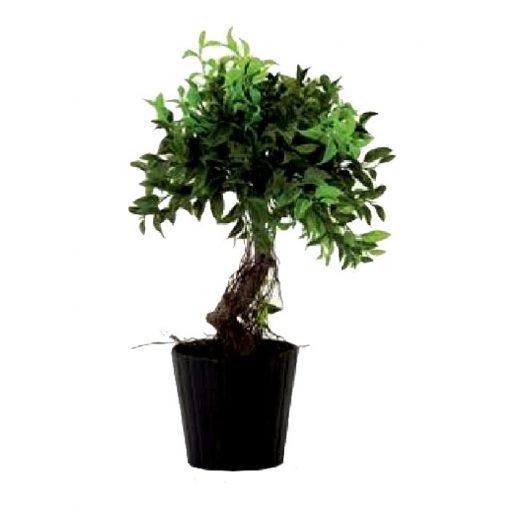 Artificial plant - Bonsai 311520