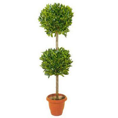 Τεχνητό φυτό – Δάφνη μπάλα διπλή 317700