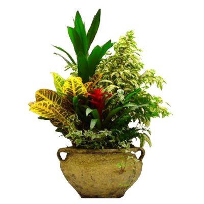 Μικρός Κήπος Tropical Garden 02
