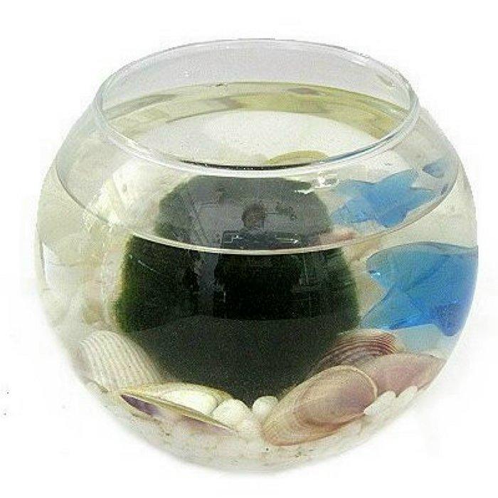 Marimo (Moss Ball)
