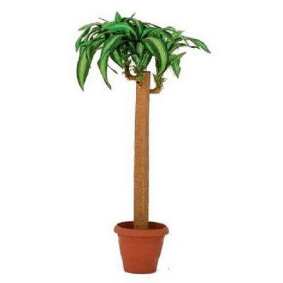 Artificial plant - Dracaena Massangeana 312500