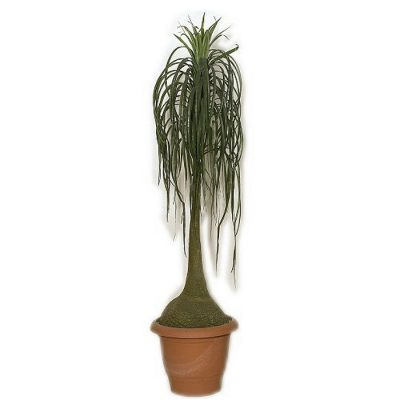 Artificial plant - Beaucarnea 313200