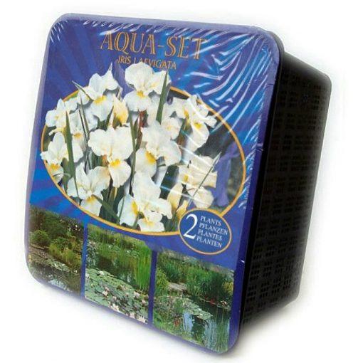 Y 12 Iris laevigata alba