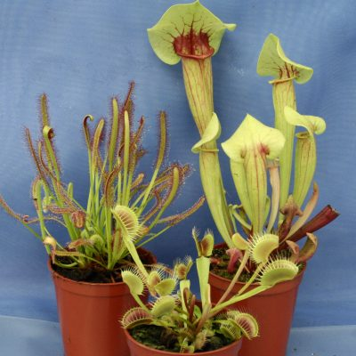 Carivorous Plants