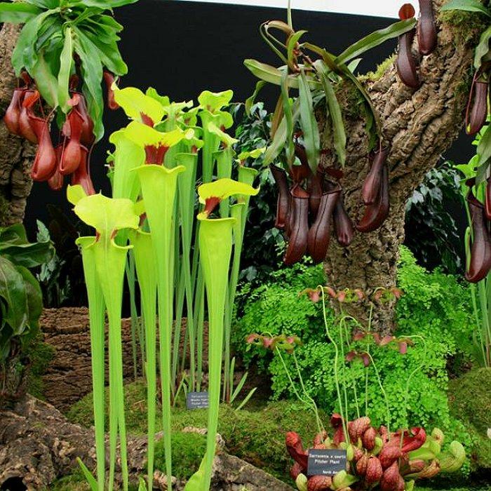 Σπόροι σαρκοφάγων φυτών