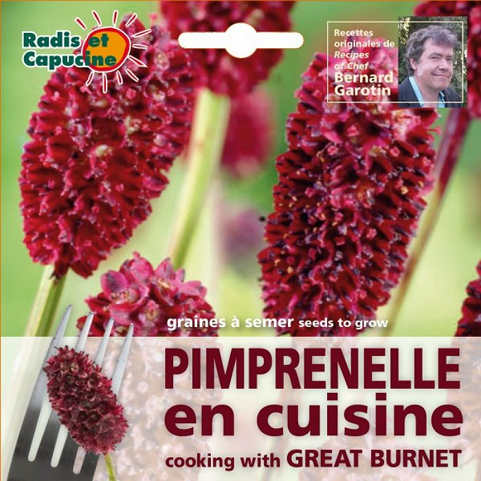 Σπόροι φαγώσιμων λουλουδιών - 026982 Σαγκουισόρβο - Burnet