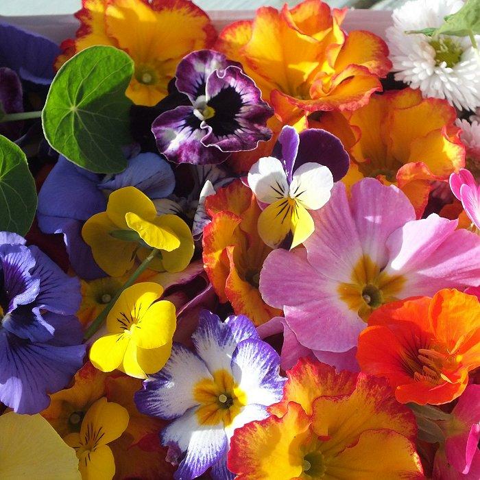 Σπόροι φαγώσιμων λουλουδιών