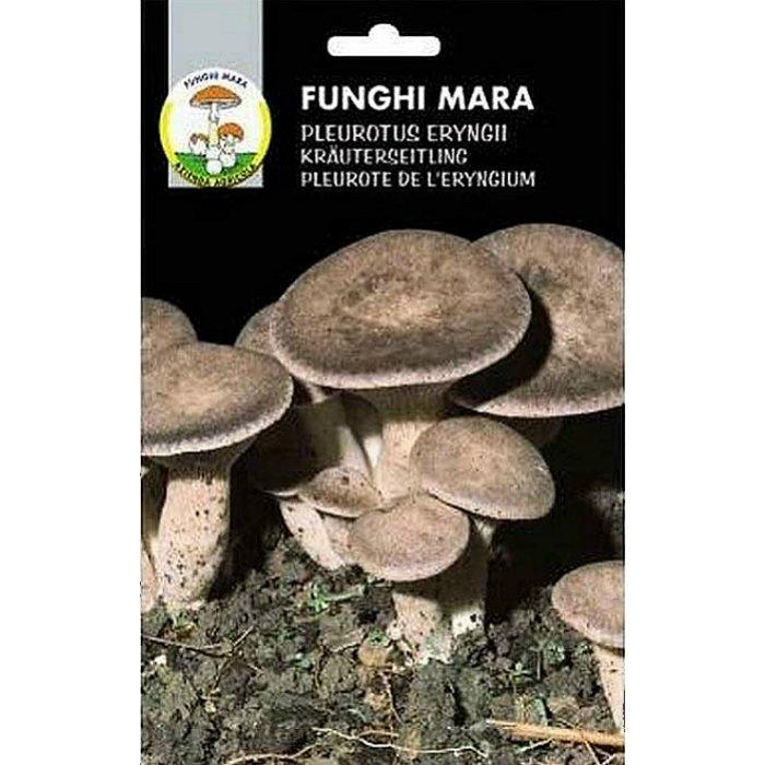 Σπόροι φαγώσιμων μανιταριών M07 CARDONCELLO (Pleurotus Erungii)
