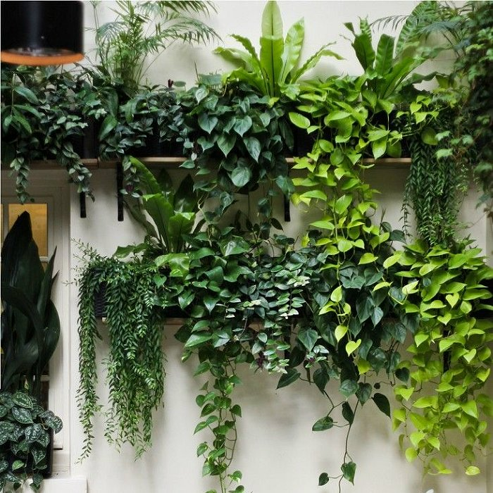 Κρεμαστά φυτά και γιρλάντες