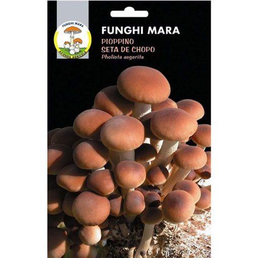 Edible mushroom seeds (micelium) M03 PIOPPINO (Pholiota Aegerita)