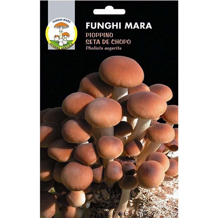 Σπόροι φαγώσιμων μανιταριών M03 PIOPPINO (Pholiota Aegerita)