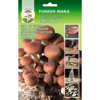 Σπόροι φαγώσιμων μανιταριών M11 PIOPPINO (Pholiota Aegerita)