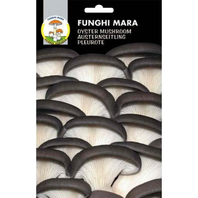 Edible mushroom seeds (micelium) M05 ORELLANA (Pleurotus Ostreatus)