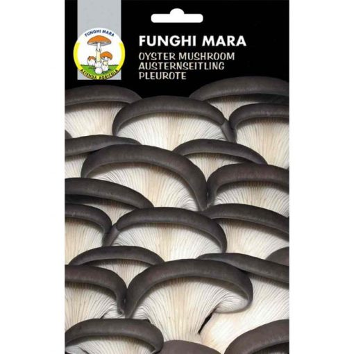 Edible mushroom seeds (micelium) M05 ORELLANA (Pleurotus Ostreatus)