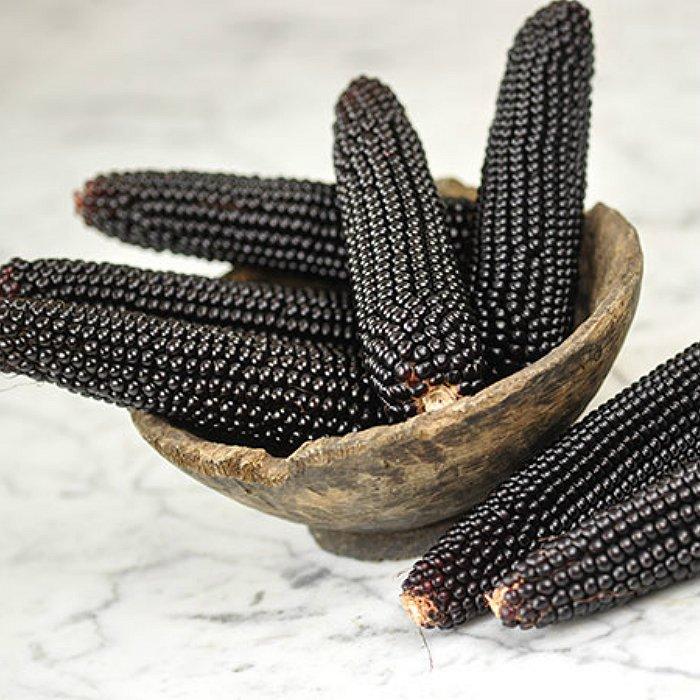 Σπόροι καλαμποκιού - DF 98710 Dakota Black (Zea mays microsperma)