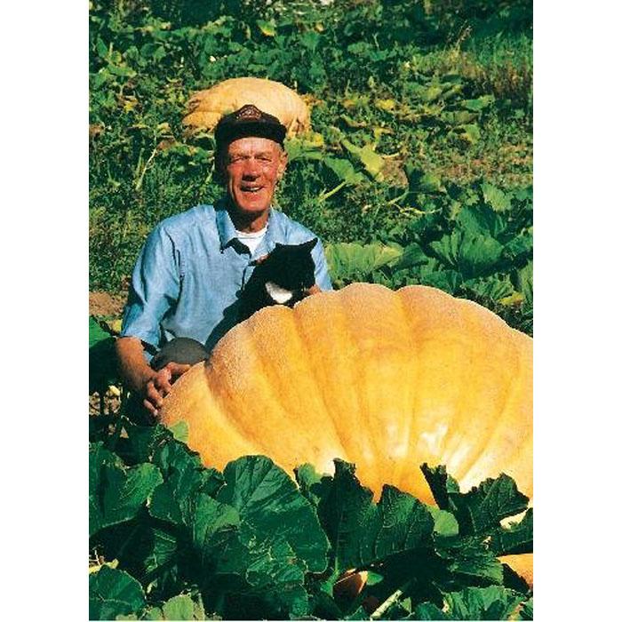 13070 Atlantic Giant (Cucurbita maxima)