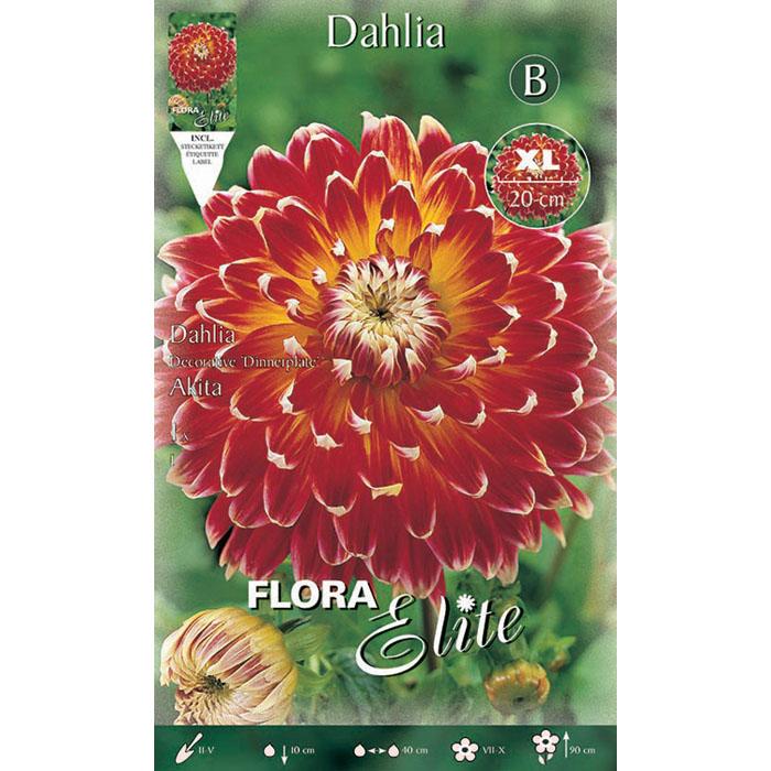 516252 Dahlia - Ντάλια Akita