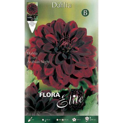 605642 Dahlia Arabian Night