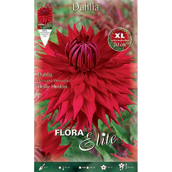 802379 Dahlia - Ντάλια Holly Huston