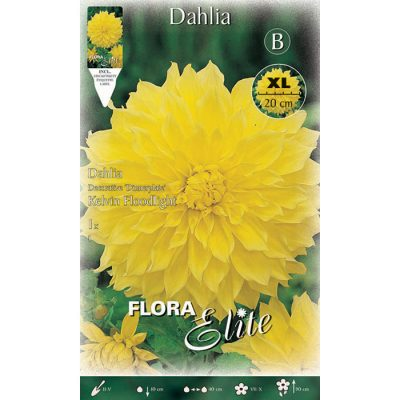 637216 Dahlia Kelvin Floodlight
