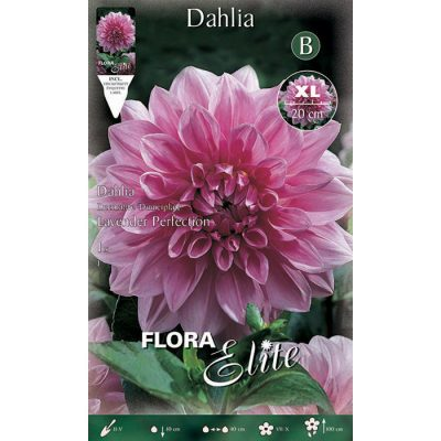 638541 Dahlia - Ντάλια Lavender Perfection