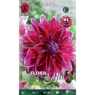 789557 Dahlia Mero Star