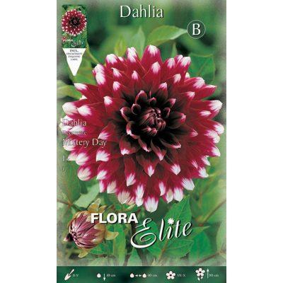 009594 Dahlia - Ντάλια Mistery Day
