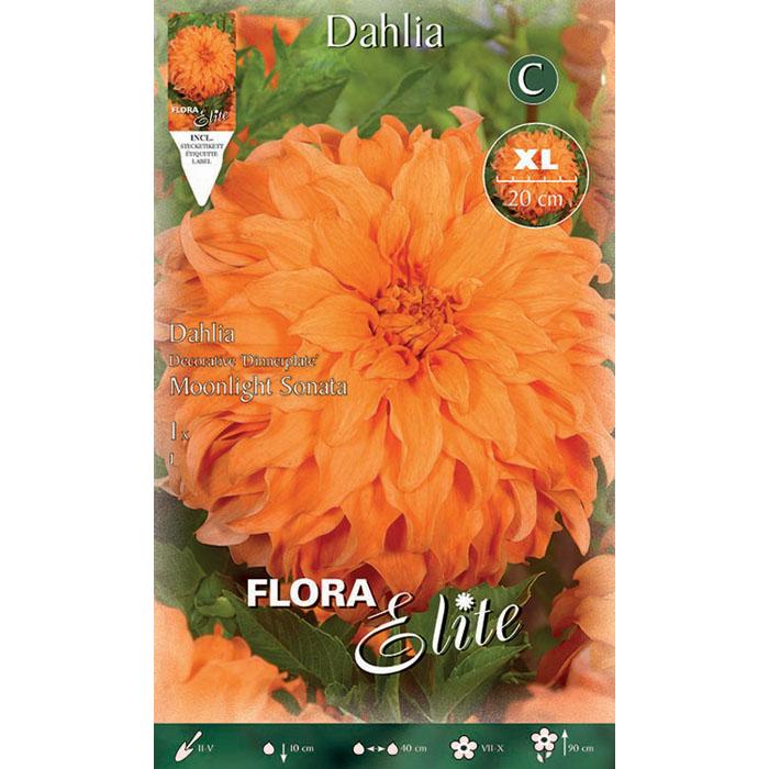 789564 Dahlia - Ντάλια Moonlight Sonata