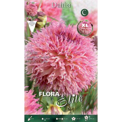 788116 Dahlia Myrtle's Folly