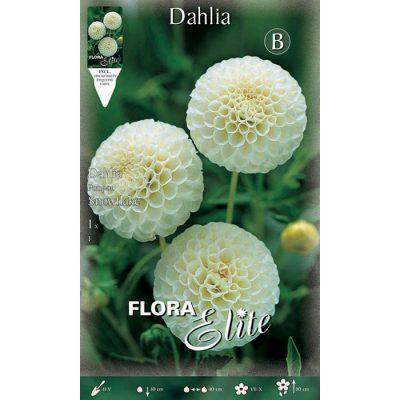616143 Dahlia Snowflake