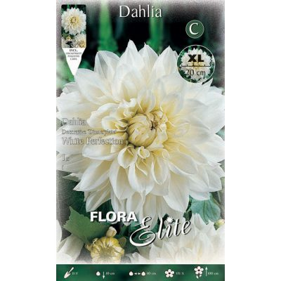 010156 Dahlia - Ντάλια White Perfection