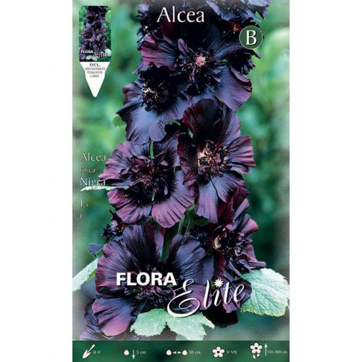 788710 Alcea - Αλθαία Δεντρομολόχα Nigra