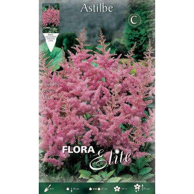 849879 Astilbe Arendsii Pink