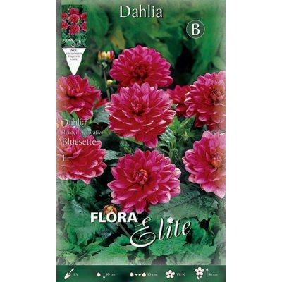 610332 Dahlia Bluesette