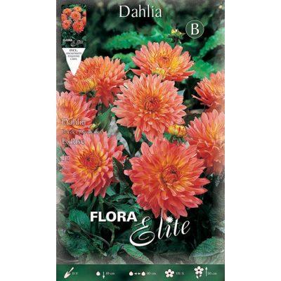 619649 Dahlia Extase