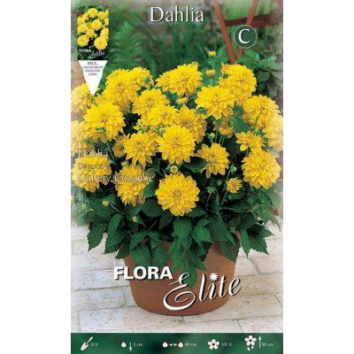 620690 Dahlia Cezanne