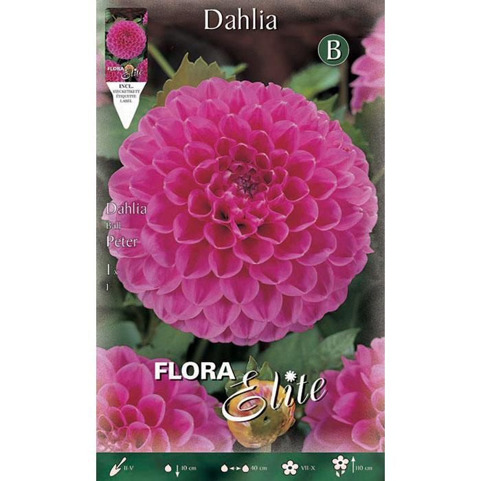 653940 Dahlia - Ντάλια Peter