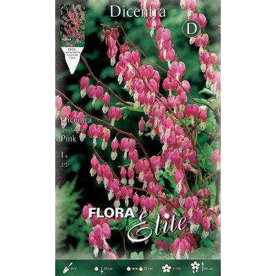822223 Dicentra Spectabilis Pink