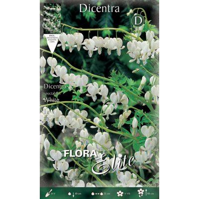 822575 Dicentra Spectabilis White