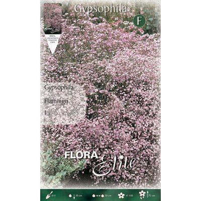 826351 Gypsophila Flamingo