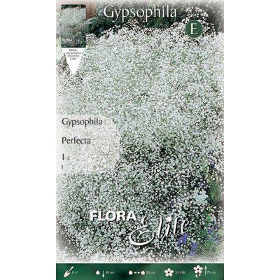 856075 Gypsophila Perfecta