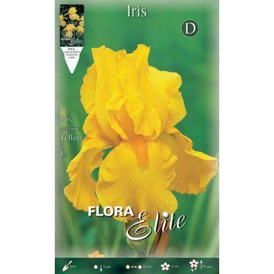 829925 Iris Yellow