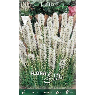 834059 Liatris Spicata White
